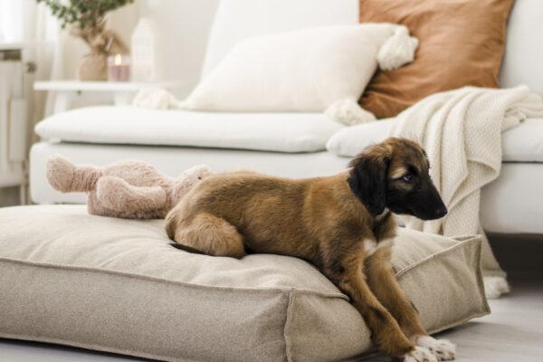 De Waanzinnige Nieuwste Velvet Hondenkussens Van 2L Home & Garden